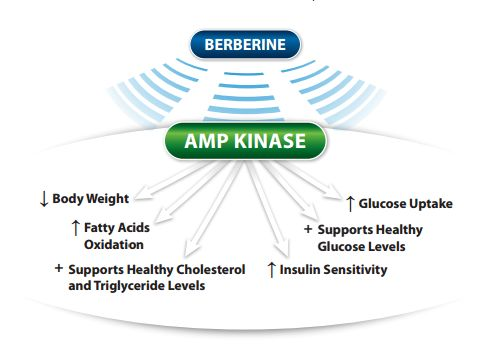 CM Core by Ortho Molecular Products berberine amp kinase
